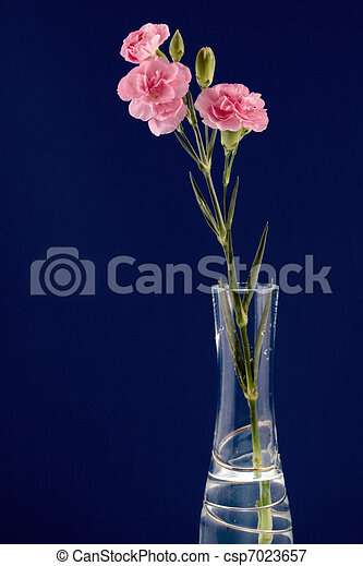 Display of a small group of Pinks - csp7023657