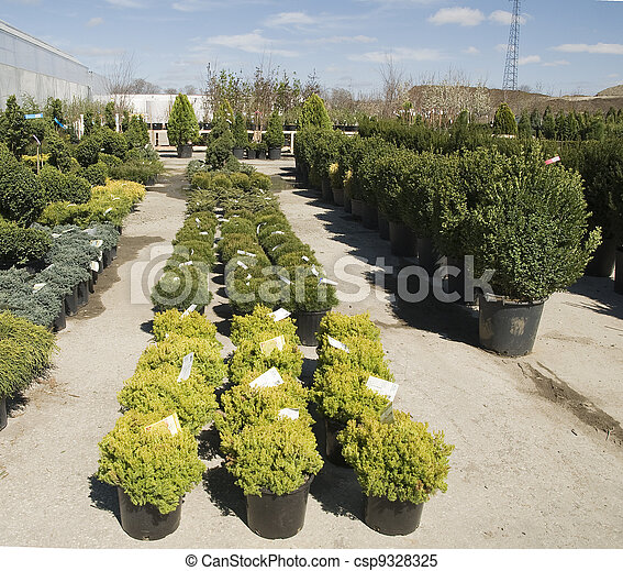display of plants in a nursery - csp9328325