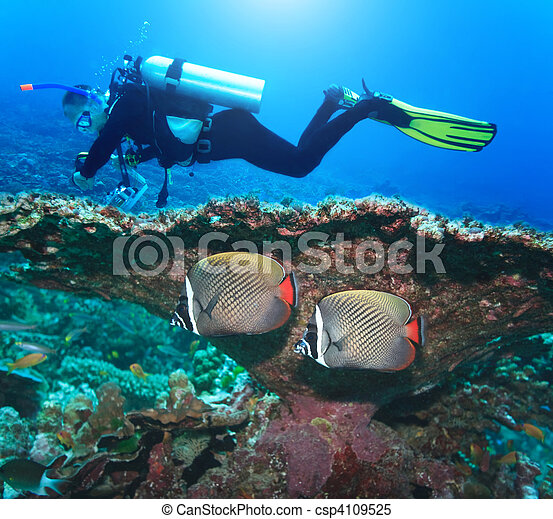 Diver and Angelfishes - csp4109525