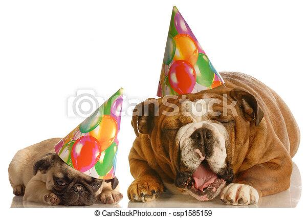 Divertente Compleanno Cani Il Portare Circa Bulldog Cappelli