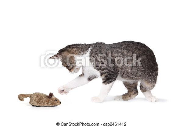 divertente, gatto, topo, finto - csp2461412