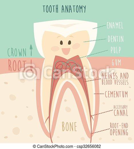 Divertido, concepto, plano, sano, ilustración, diente, anatomía ...