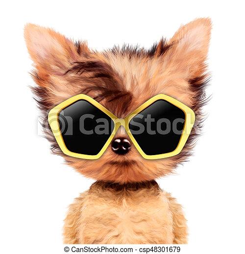 58c2596c24 Divertido, gafas de sol, niña, perrito, adorable, aviador. Divertido ...