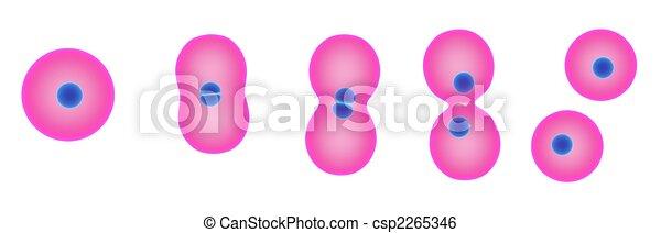 division, cellule - csp2265346