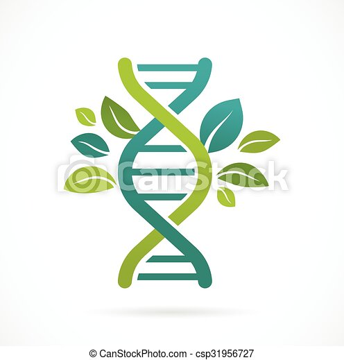 DNA, genetic icon - tree with green leaves - csp31956727