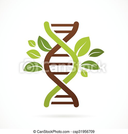 DNA, genetic icon - tree with green leaves - csp31956709