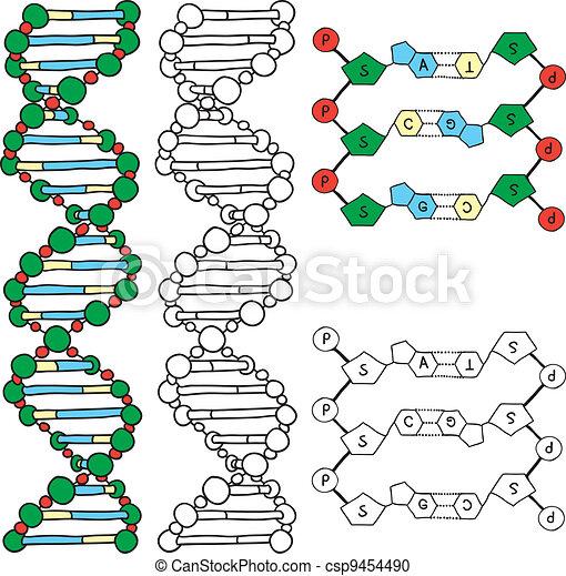 DNA - helix molecule model - csp9454490