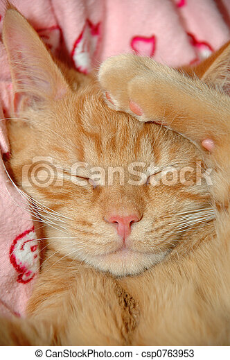 doce, sonolento, gatinho - csp0763953