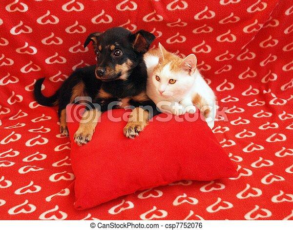 dog:, amitié, chat - csp7752076