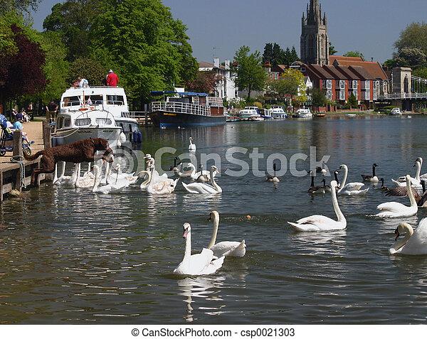 dog amongst swans - csp0021303
