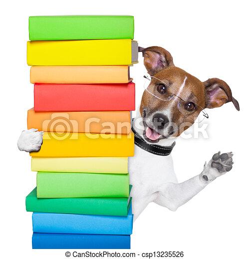 dog and books - csp13235526