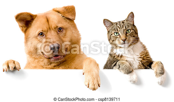 Dog and Cat above white banner - csp8139711