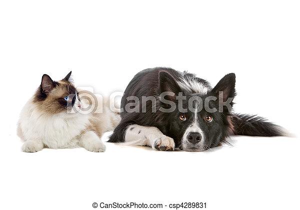 dog and cat - csp4289831