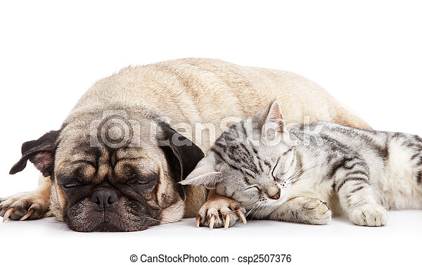 dog and cat - csp2507376