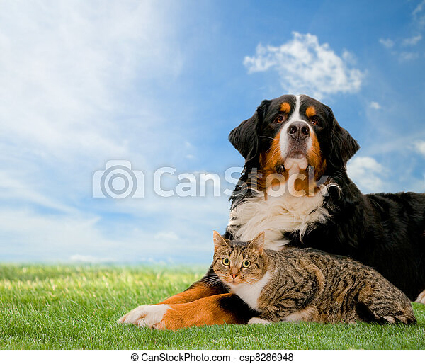 Dog and cat together - csp8286948