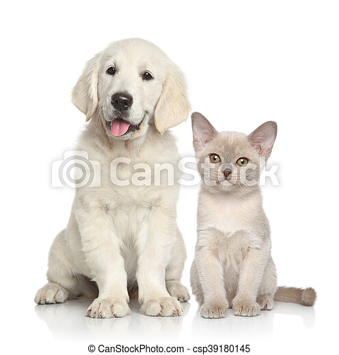 Dog and Cat together - csp39180145