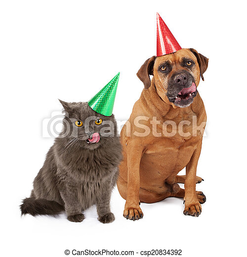 Dog And Cat Wearing Birthday Hat Licking Lips