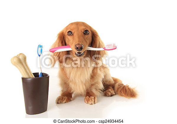 Dog and tooth brush - csp24934454