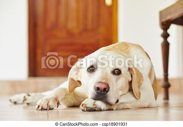 Dog at home - csp18901931