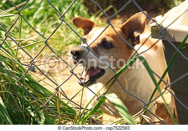 Dog Barking - csp7522563