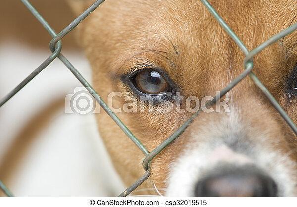Dog behind wire mesh - csp32019515