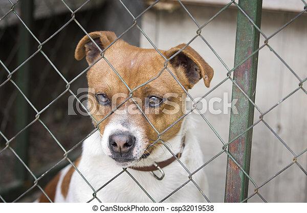 Dog behind wire mesh - csp32019538