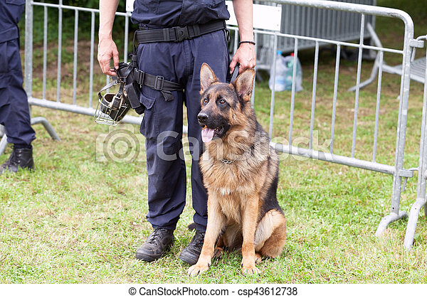 dog., berger, police, duty., allemand, policier - csp43612738