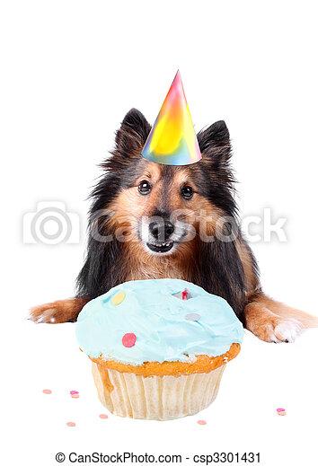 Dog birthday - csp3301431