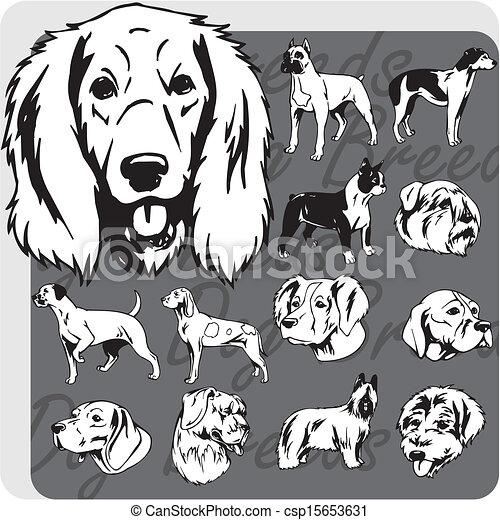 Dog Breeds - vector set - csp15653631