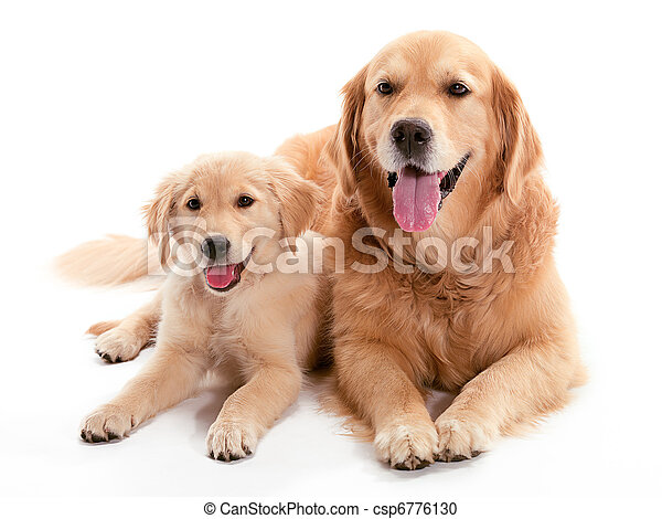 dog, buddys - csp6776130