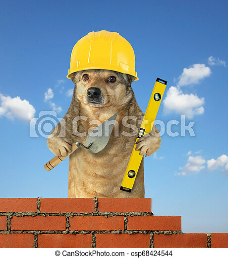 Dog builds the brick wall 2 - csp68424544