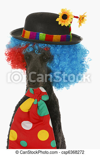 dog clown - csp6368272