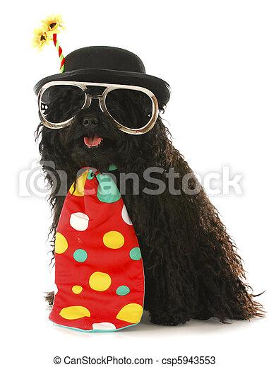 dog clown - csp5943553