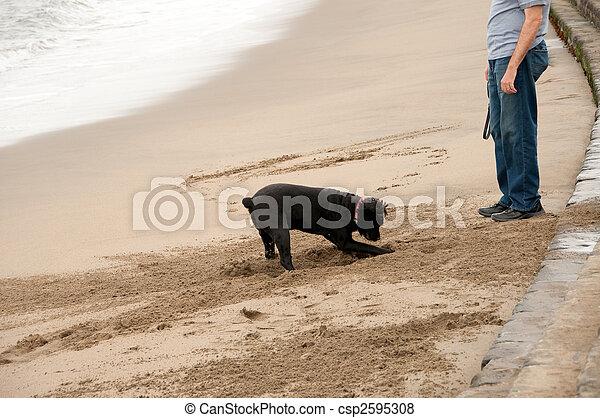 dog digging hole at owner\'s feet - csp2595308