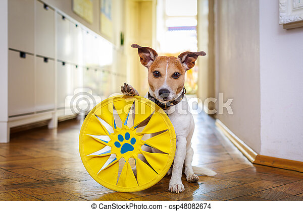 dog disc and toy ready to play - csp48082674