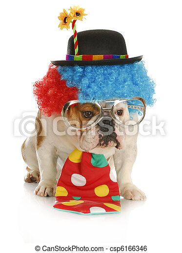 dog dressed like a clown - csp6166346  sc 1 st  Can Stock Photo & Dog dressed like a clown. Clown - english bulldog wearing clown ...
