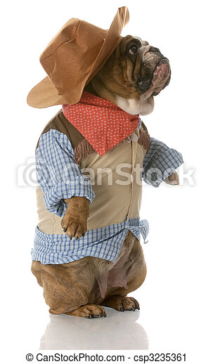 Dog Dressed Up As A Cowboy English Bulldog Standing Up Wearing