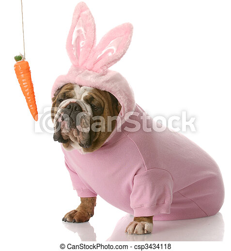 dog dressed up as easter bunny - csp3434118