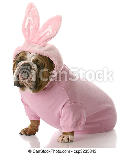 dog dressed up as easter bunny - csp3235343