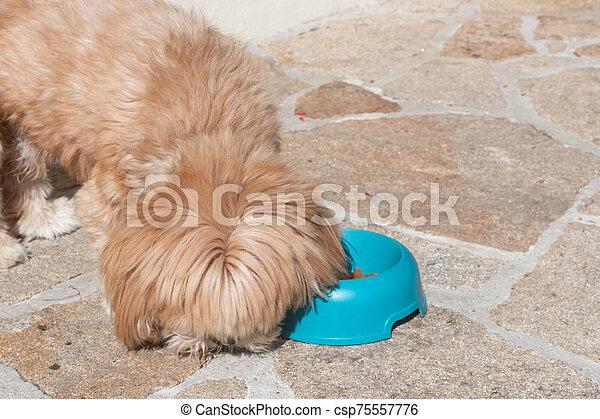 Dog eating in a dog bowl - csp75557776