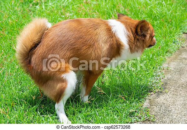 Dog feces in garden - csp62573268