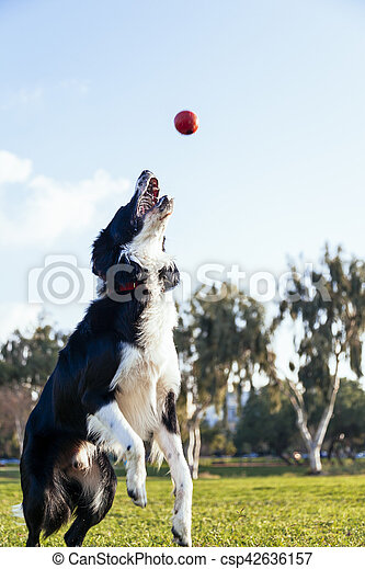 Dog Fetching in the Park - csp42636157