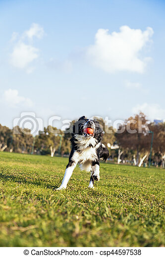 Dog Fetching in the Park - csp44597538