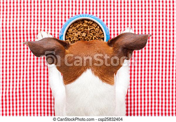 dog food bowl - csp25832404