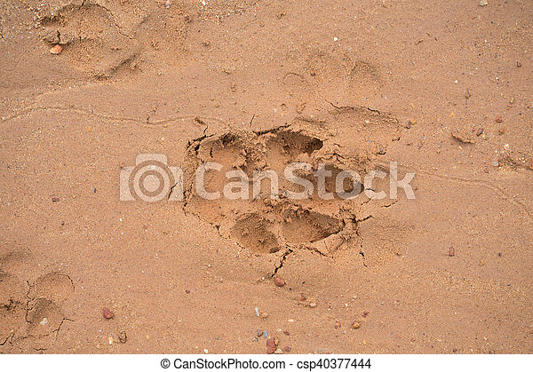 dog footprint on beach - csp40377444