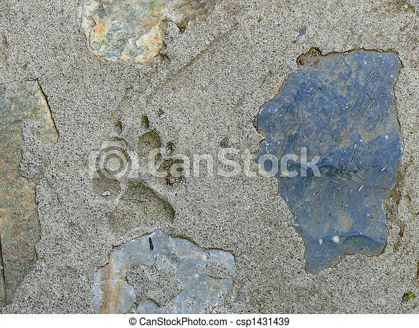 dog footprint - csp1431439