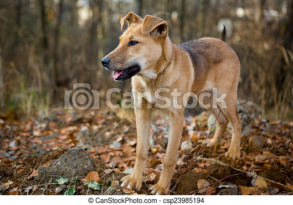 Dog for a walk in the forest  - csp23985194