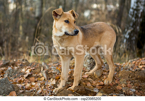 Dog for a walk in the forest - csp23985200
