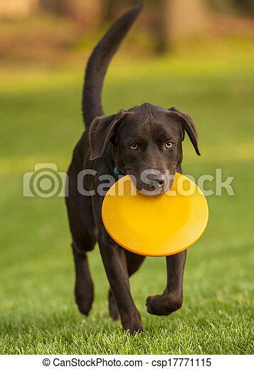 dog frisbee - csp17771115