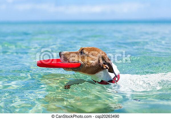 dog frisbee - csp20263490